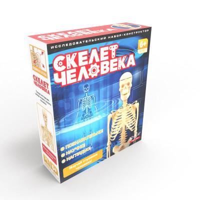 Исследовательский набор Скелет человека